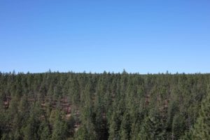 Fountain Fire Overlook (Moose Camp Road, South of SR299) - EXISTED